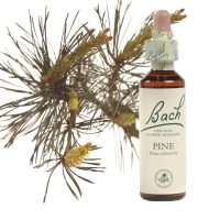 24-pine